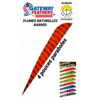gateway plumes naturelles paraboles barred 4 pouces