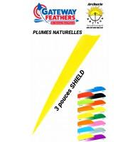 gateway plumes naturelles shield uni 3 pouces
