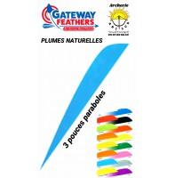 gateway plumes naturelles paraboles uni 3 pouces