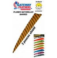 gateway plumes naturelles shield  barred 3 pouces (par 100)