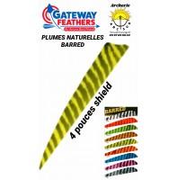 gateway plumes naturelles shield  barred 4 pouces