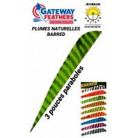 gateway plumes naturelles paraboles barred 3 pouces (par 100)