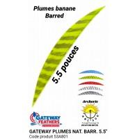 "gateway plumes naturelles banane barred 5.5 "" (pack de 100) 53a801"